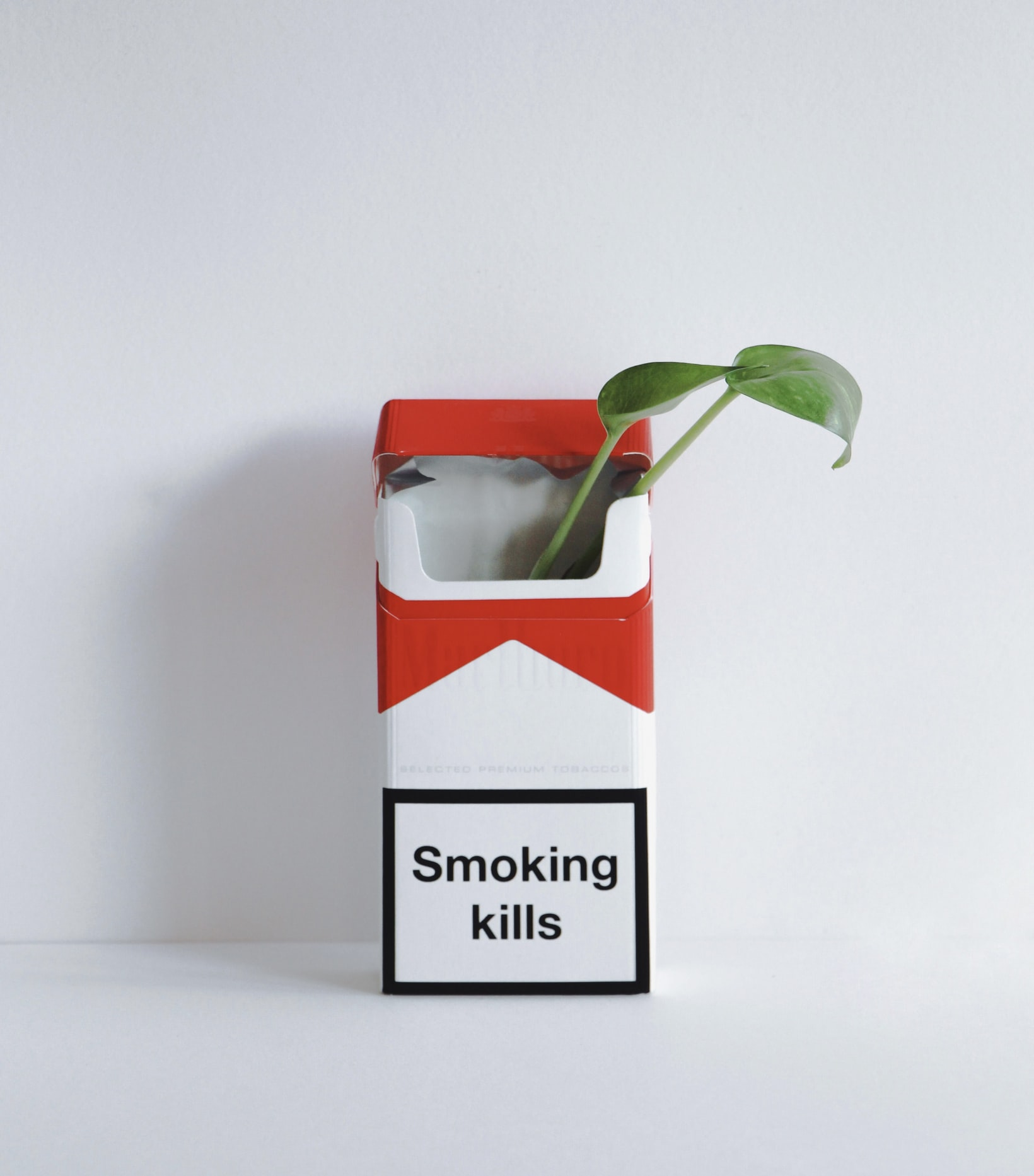 Smoking kills, plante, cigaretpakke